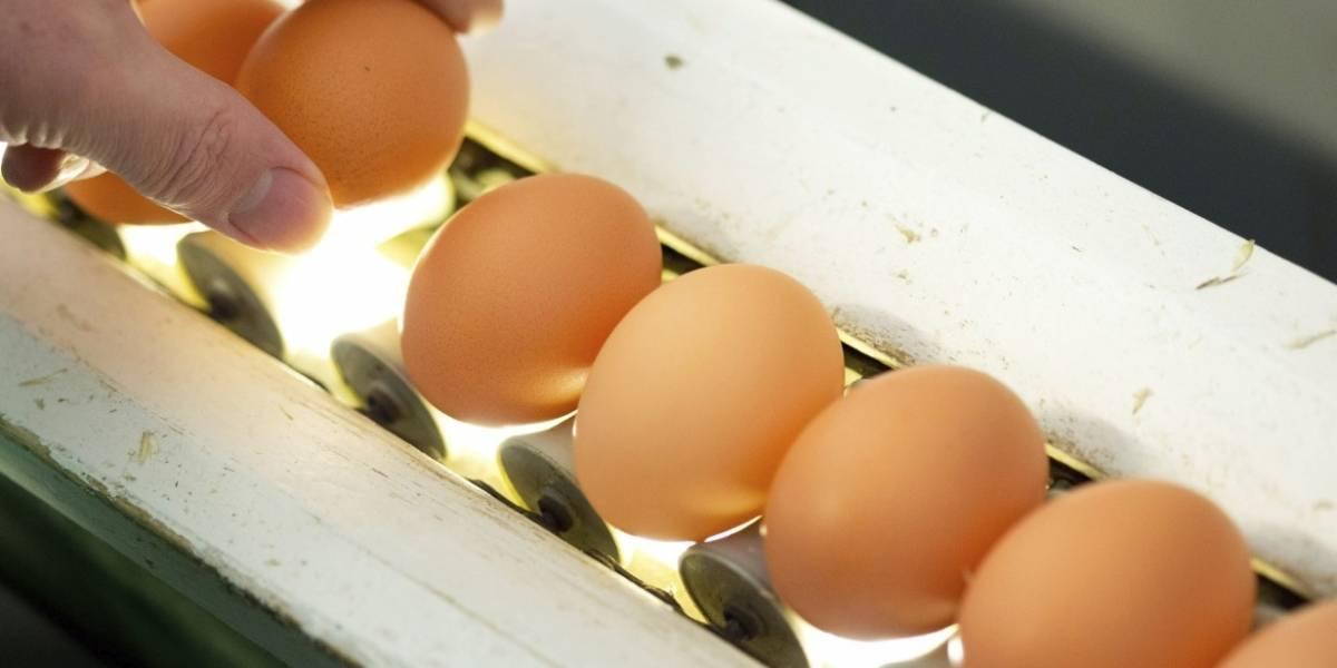 Por esta razón usted no debe guardar los huevos en la puerta de la nevera
