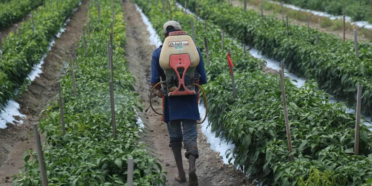 Becan a más de 20 agricultores mexicano para trabajar en Estados Unidos