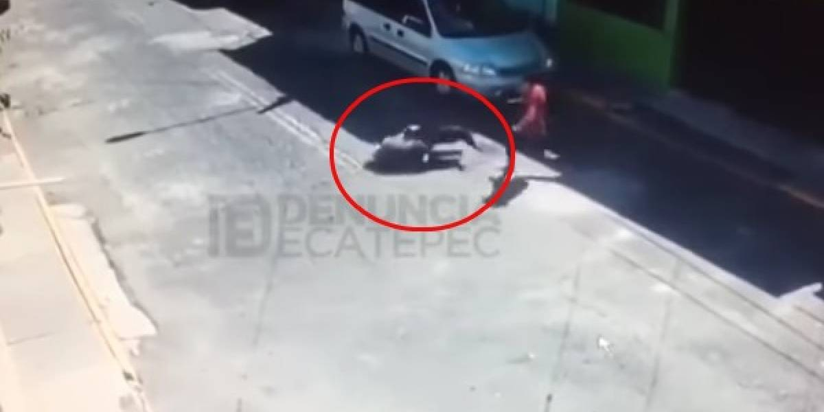 VIDEO: Pitbull se escapa y ataca a mujer en la GAM