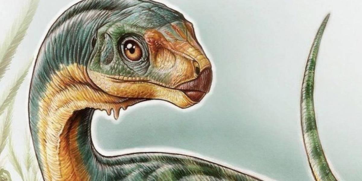 """El enigmático """"Chilesaurio diegosuarezi"""" será protagonista de la primera exposición de dinosaurios del país y la entrada será gratuita"""