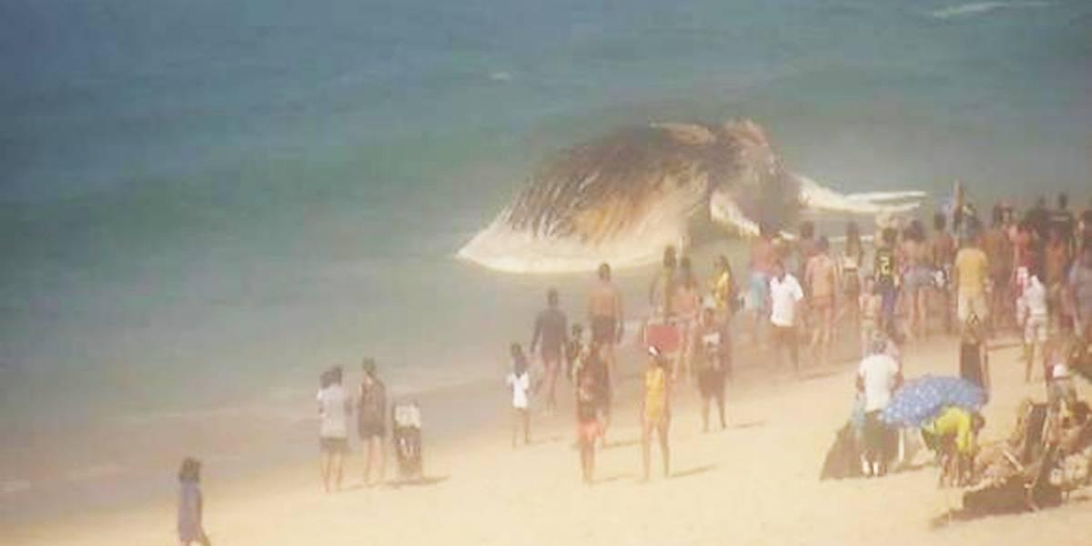 Baleia morta fica encalhada em praia do Rio e atrai curiosidade dos banhistas
