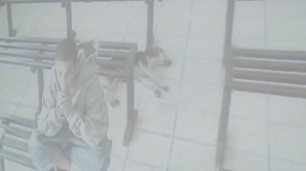 Dura condena a un pandillero que estuvo acompañado de un perro