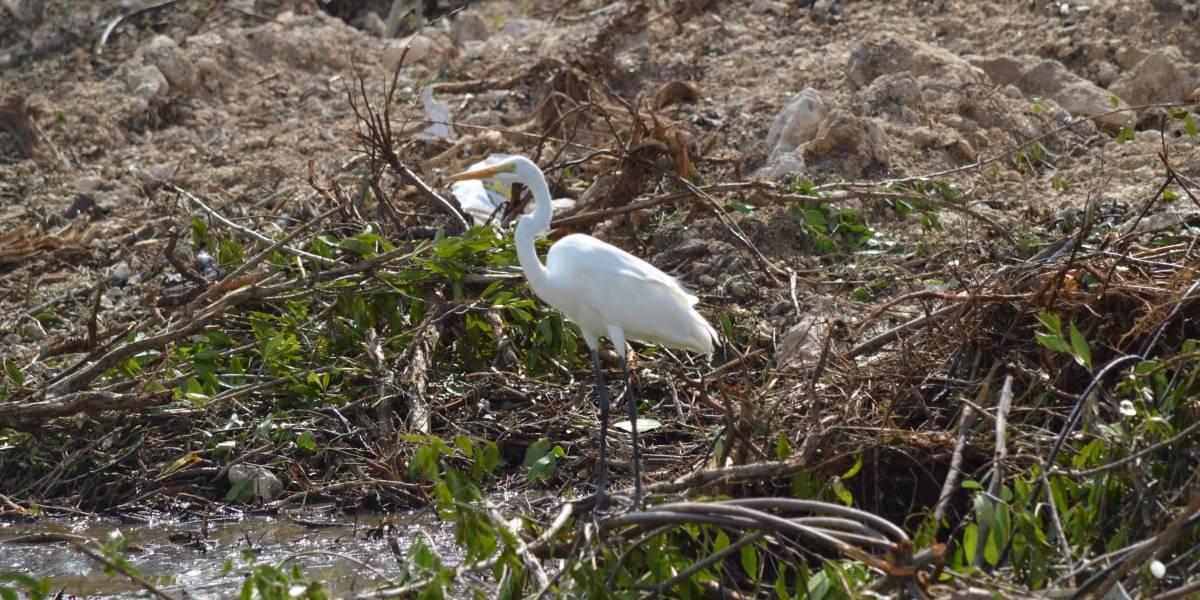 Gobierno de Quintana Roo sensibiliza a alumnos en cuidado del medio ambiente