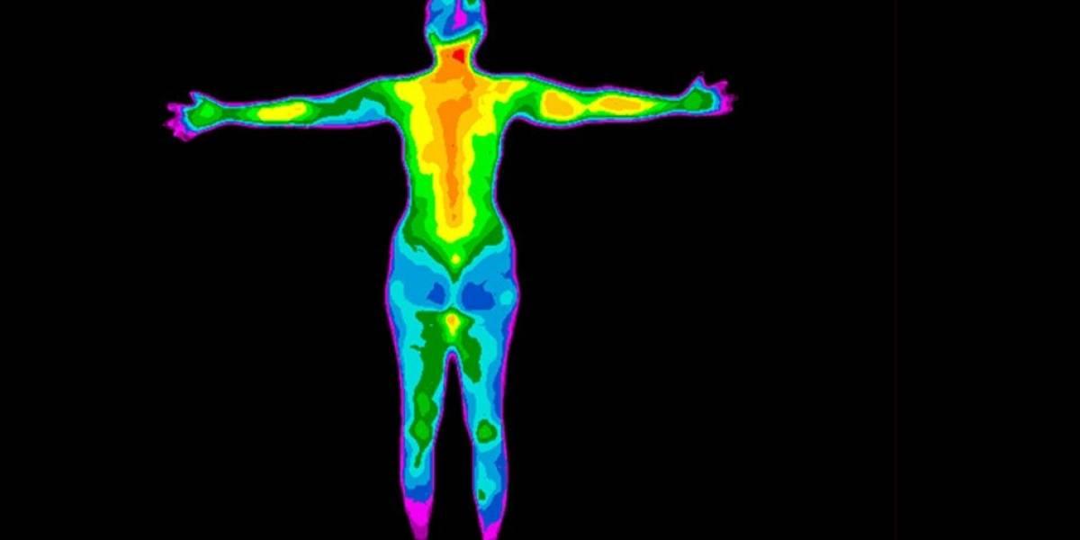 Qué es la homeostasis, la propiedad de la que dependen nuestras vidas