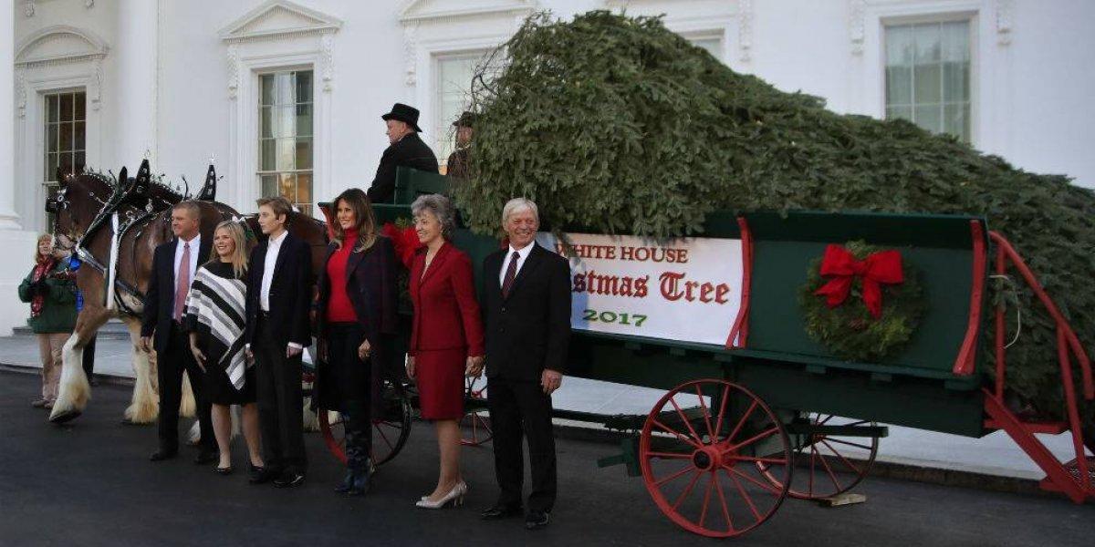 Llega árbol para la primera navidad de los Trump en la Casa Blanca