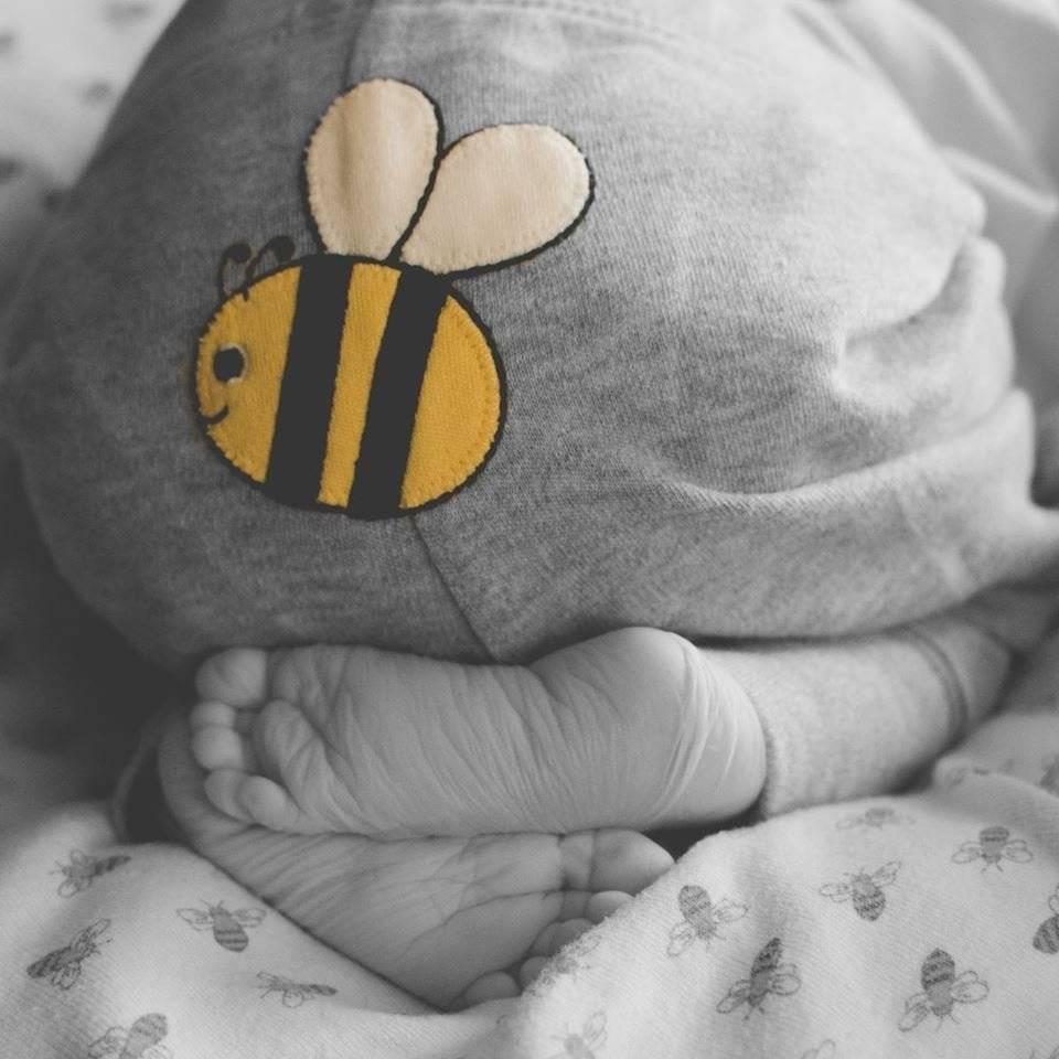 Ensaio foi inspirado na paixão da família por abelhas Reprodução/Facebook