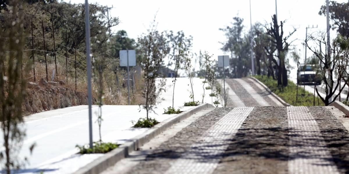 Parten bosque en Zapopan para introducir una vialidad