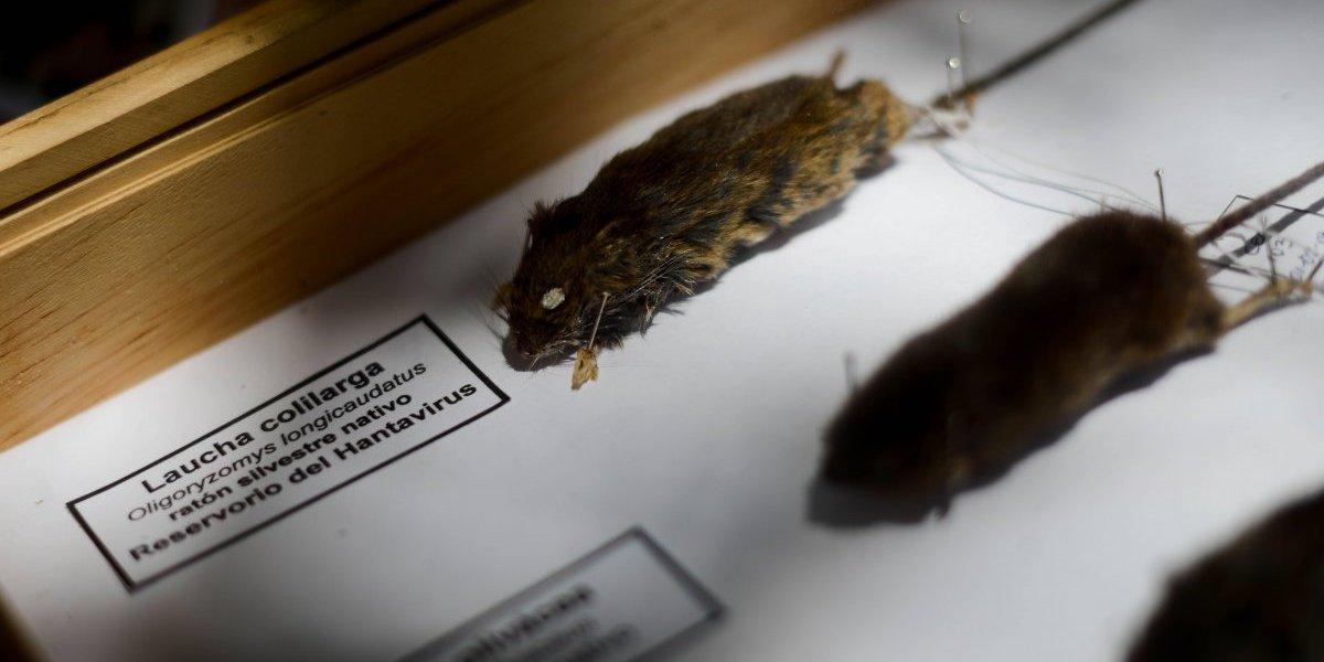 Washington usa hielo seco para combatir plaga de ratones