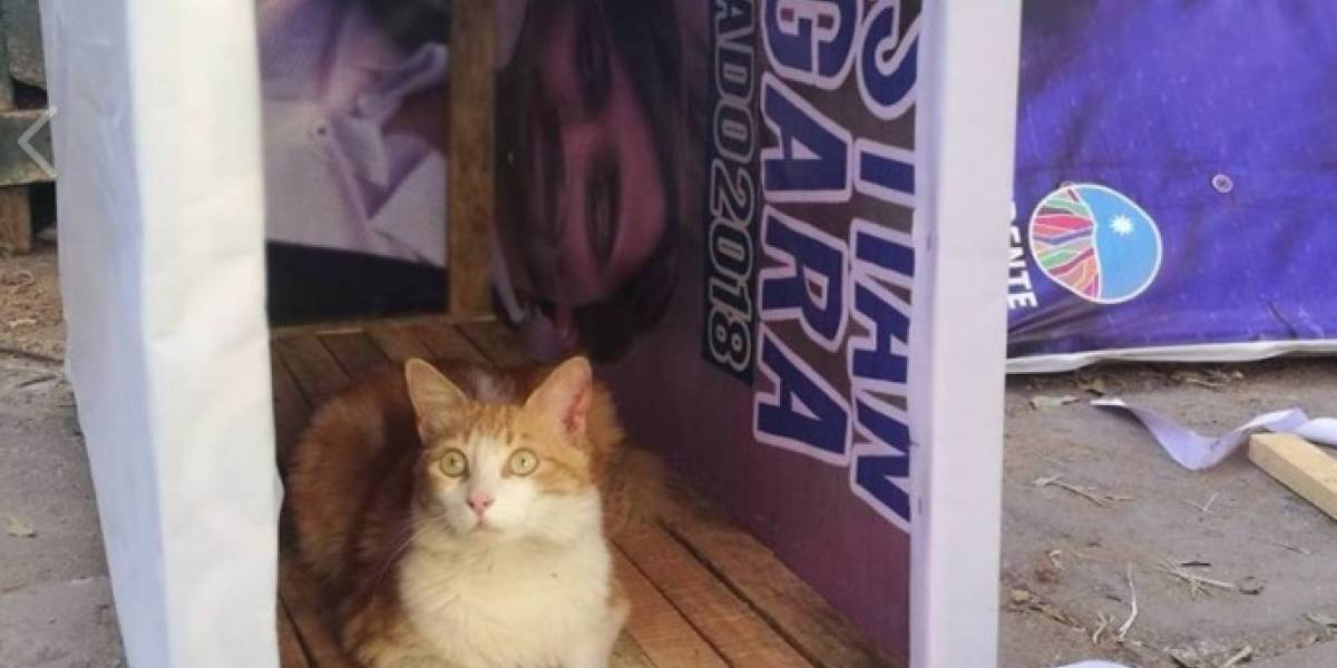 Ejemplar medida: core del Frente Amplio transformó su propaganda electoral en casas para gatos y perritos callejeros