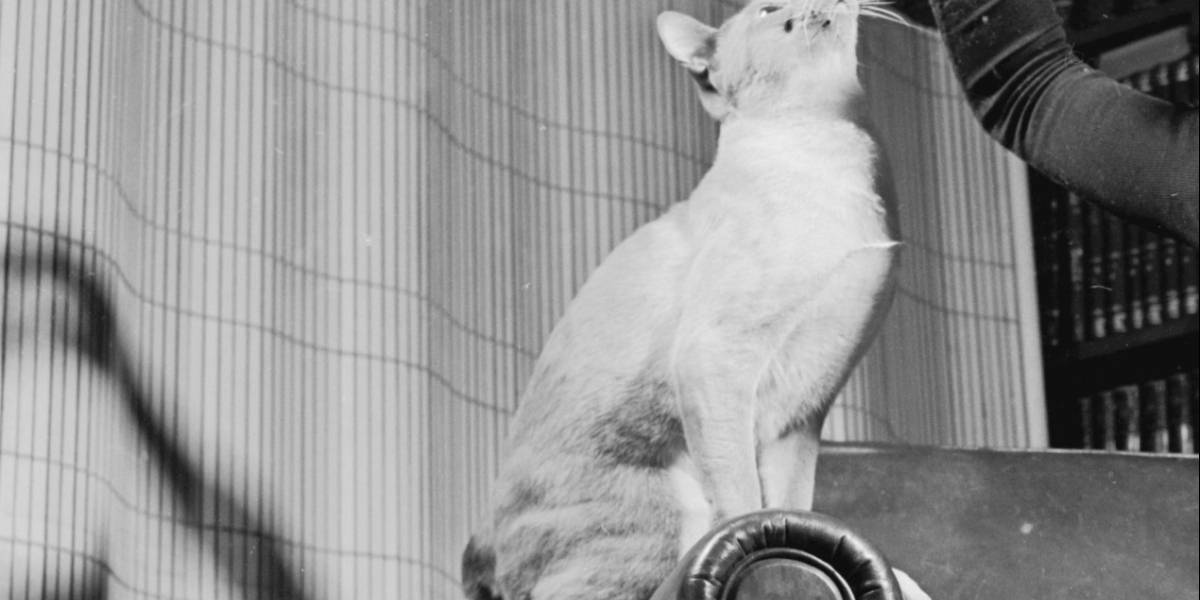 """Joven guatemalteco se toma foto con su gato y un """"fantasma"""" aparece detrás"""