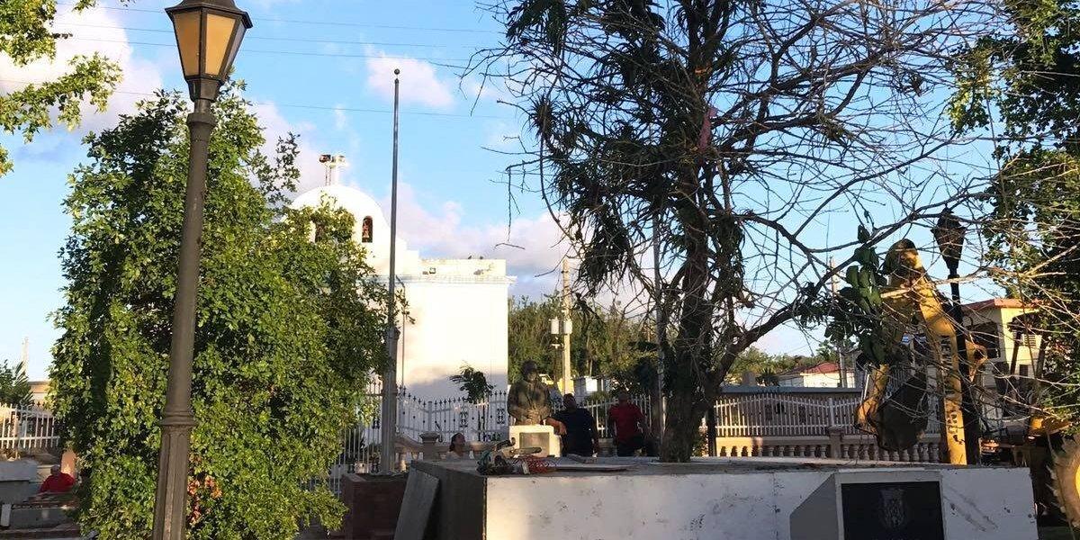 Árbol arrancado por María será encendido en Vega Alta