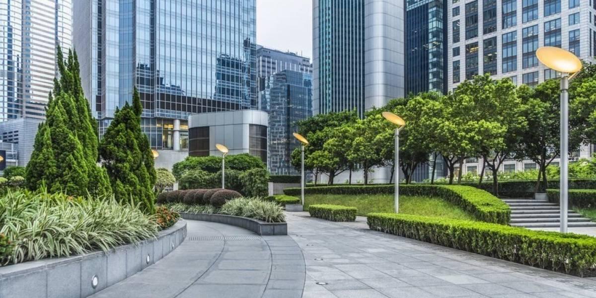 Você sabia que as árvores crescem mais rápido nas cidades do que no campo?