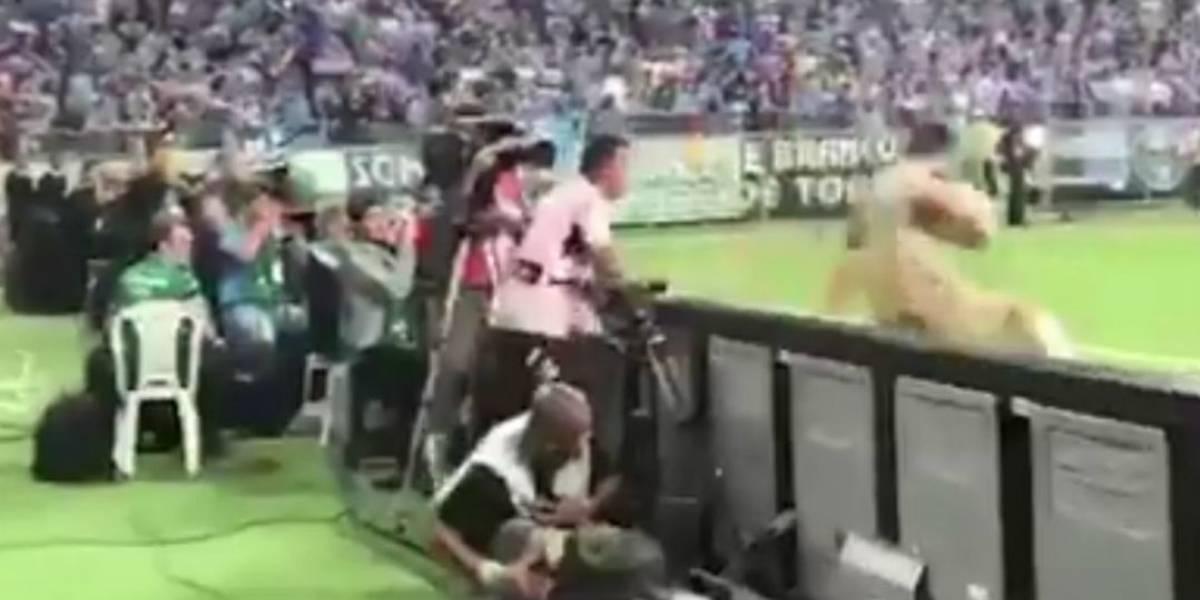 Gandula do Grêmio é flagrado cuspindo em goleiro do Lanús