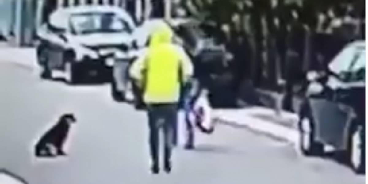 VIDEO. Así fue como un perro callejero salvó a una mujer de un asalto