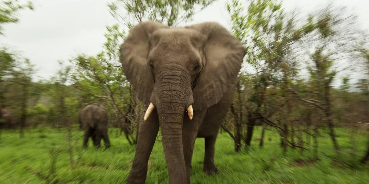 Video: Elefante aplasta a hombre por tomarle una foto