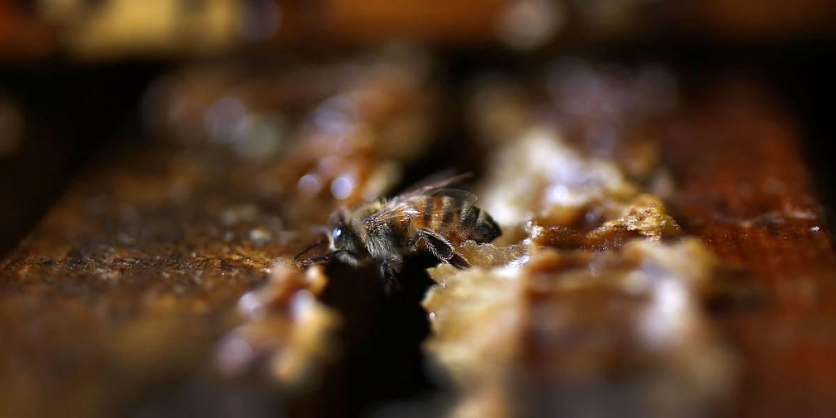 Hombre que podaba un árbol en Barranquilla murió al ser picado por enjambre de abejas