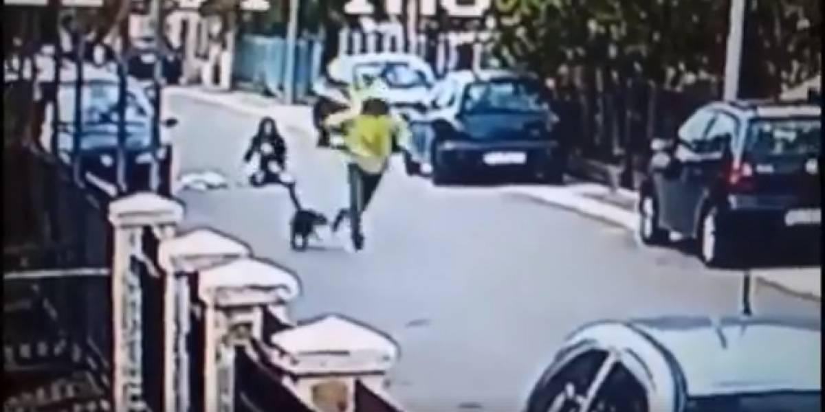 Cachorro ataca assaltante e livra mulher de roubo