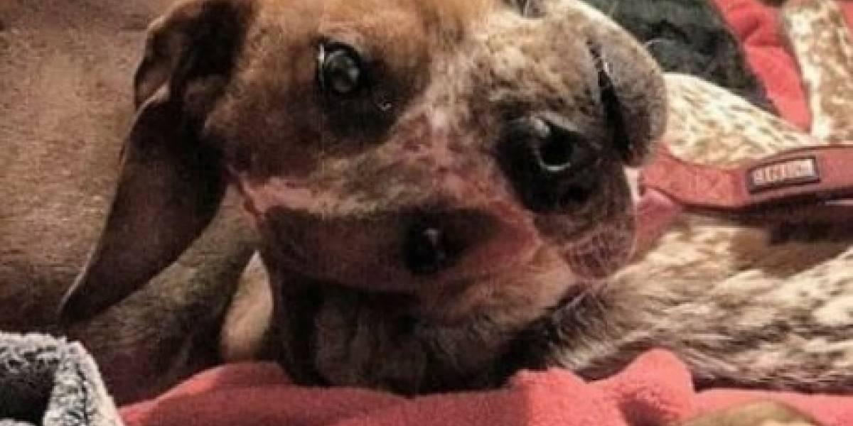 """""""Acabo de pasar 20 segundos terribles tratando de entender esta foto"""": ¿Qué pasa con el rostro de este perro?"""