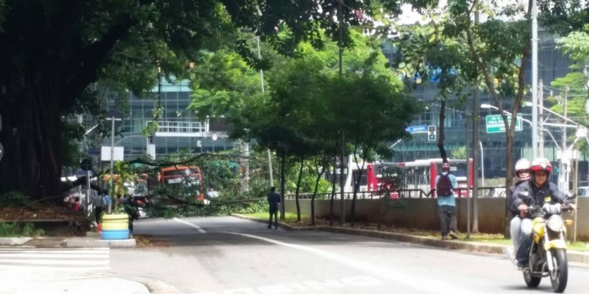 Queixas sobre árvores lideram reclamações em São Paulo