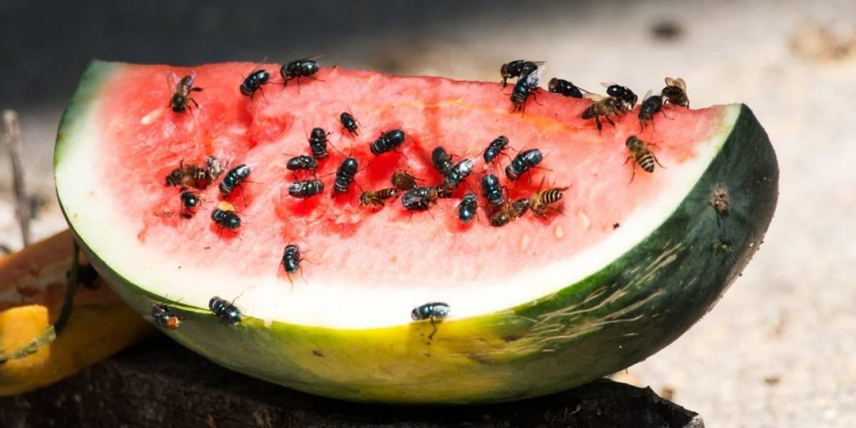 Cuántas bacterias transporta una mosca y cómo propaga enfermedades