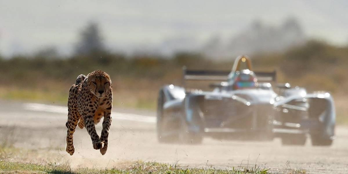 Fórmula E disputa racha com guepardo