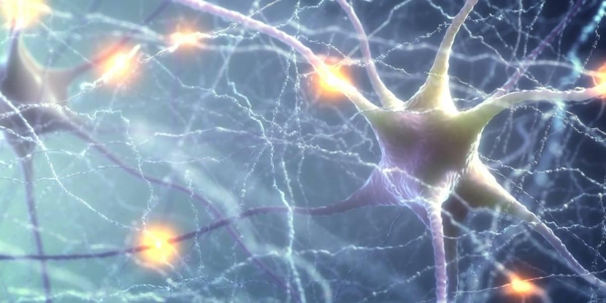 Mexicano descubre método para reanimar neuronas afectadas por Alzheimer
