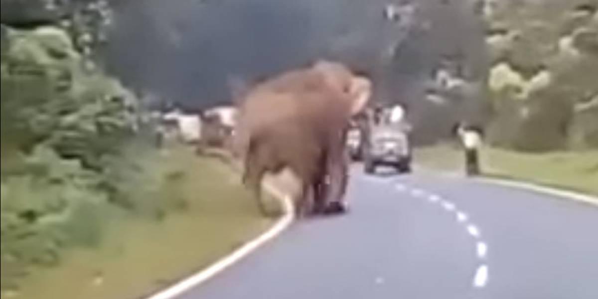 Su deseo era sacarse una selfie con un elefante pero su sueño fue pisoteado: así fue el aplastante resultado