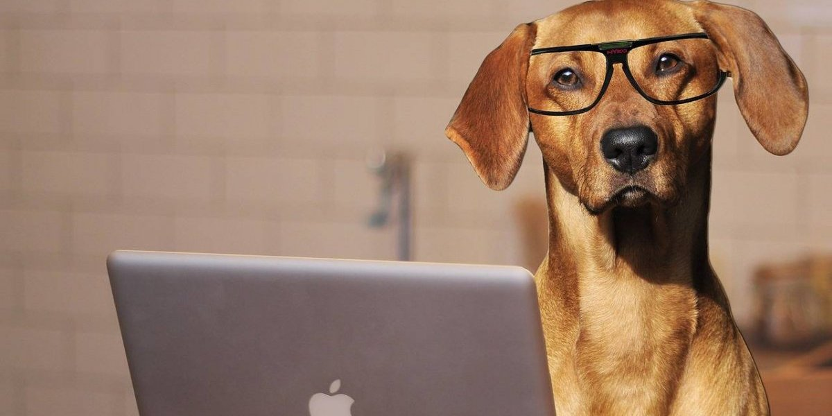 De esta manera sabrás si tu perro es zurdo o diestro