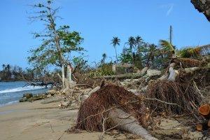 Una muestra del estado de las playas de Rincón, luego del huracán María. / Foto: Raúl O. Ortiz/Sea Grant PR