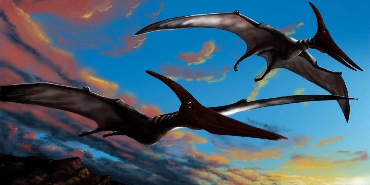 Rara descoberta: cientistas acham 215 ovos de pterossauros na China