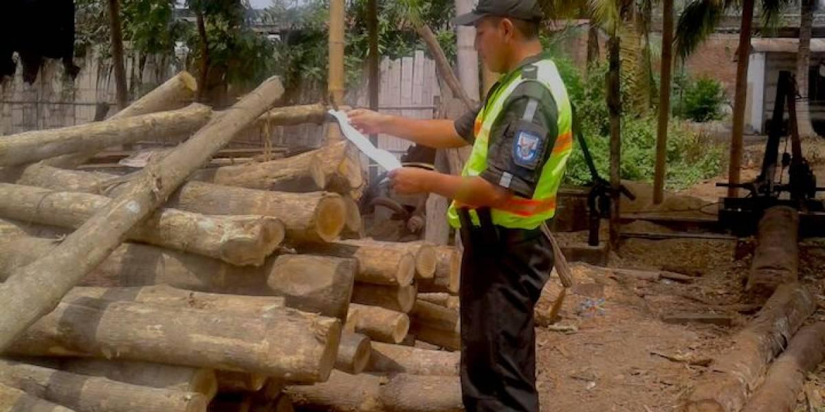 Ecuador: tala ilegal amenaza la veda de caoba decretada por el gobierno