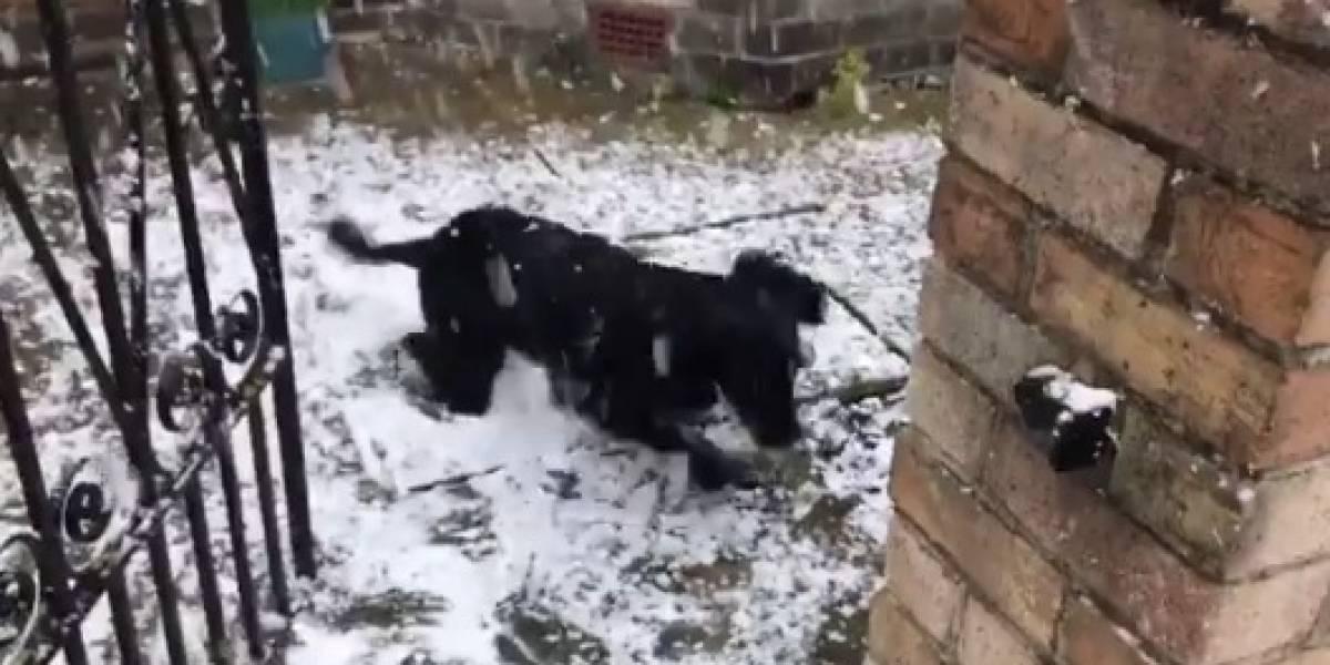 La mejor reacción de todas: el momento en que perrito conoció la nieve que derritió los corazones por todo Internet