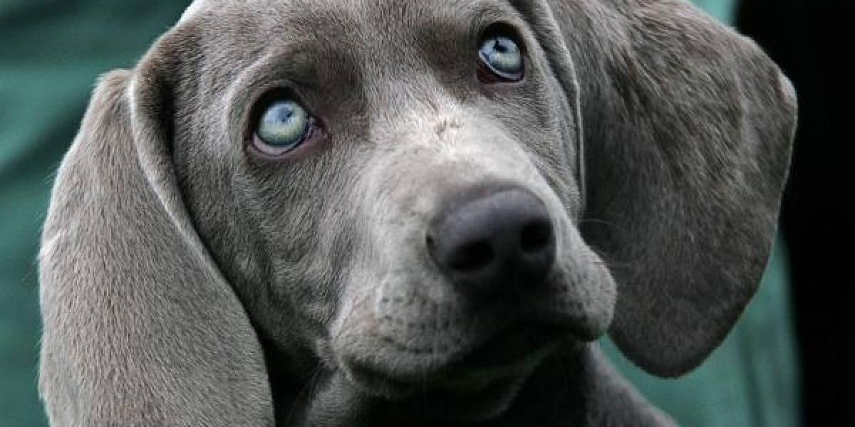 No, tu perro no te ama: científicos revelan que el mejor amigo del hombre solo actúa por placer