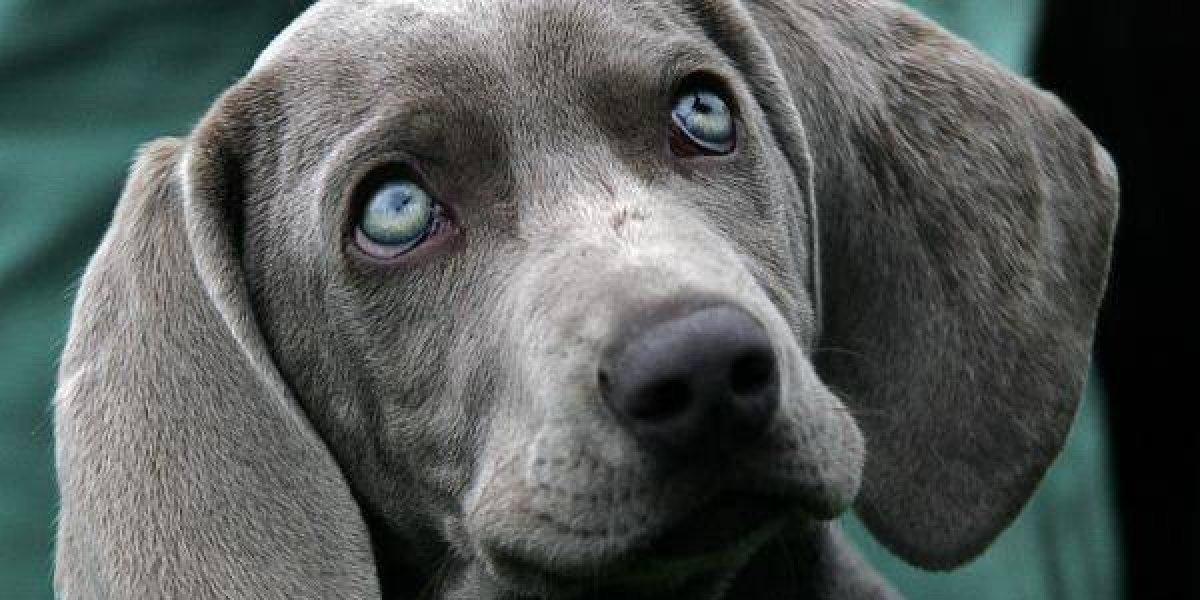 Mucho ojo este fin de año: perro se lanza desde un undécimo piso asustado por los estruendos de los fuegos artificiales