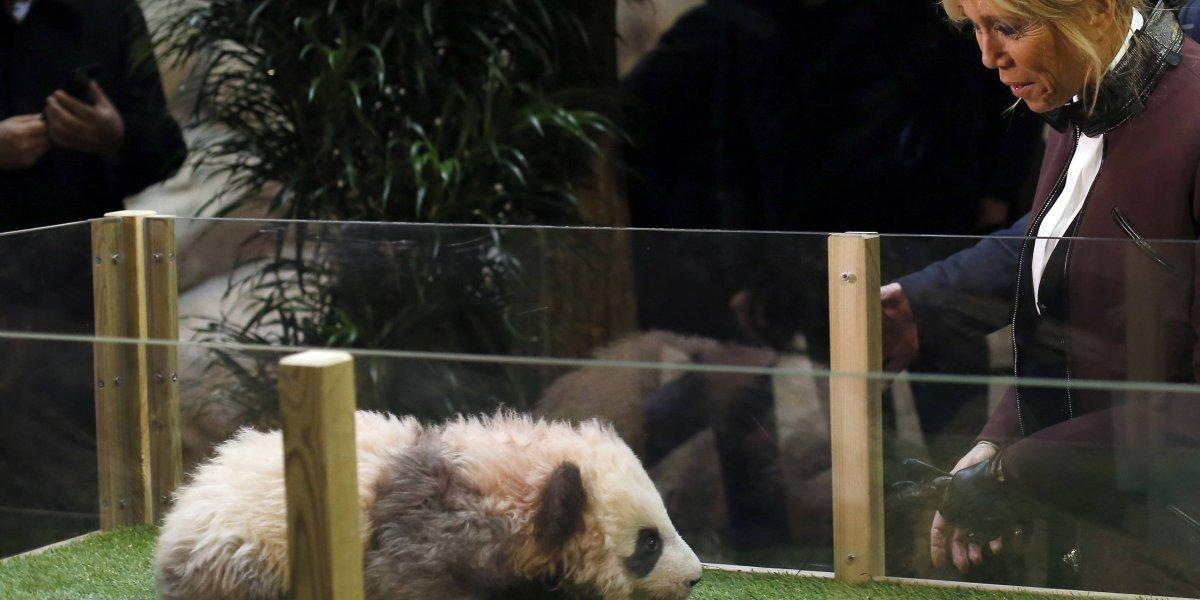 Primer bebé panda en Francia ya tiene nombre