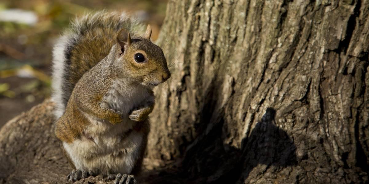 Esquilo que acabou com decoração natalina é acusado de 'vandalismo'