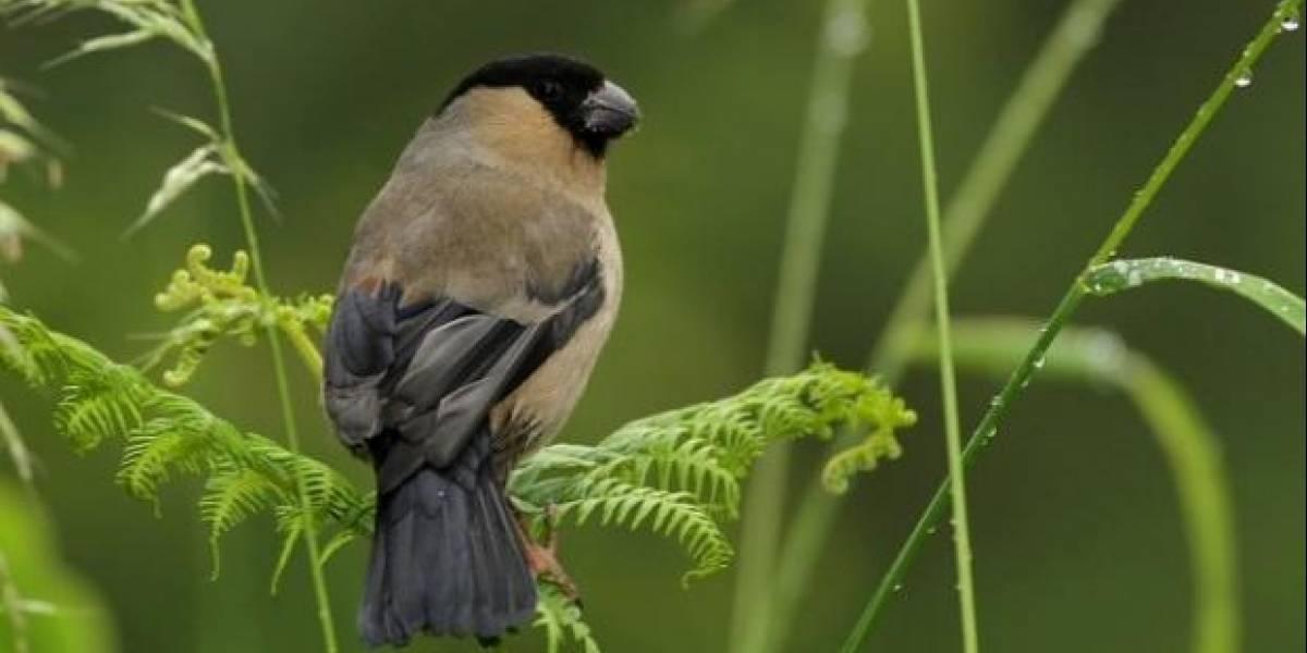 No, no fue un Pokémon: científicos quedan con la boca abierta tras ver a ave evolucionando en otra especie