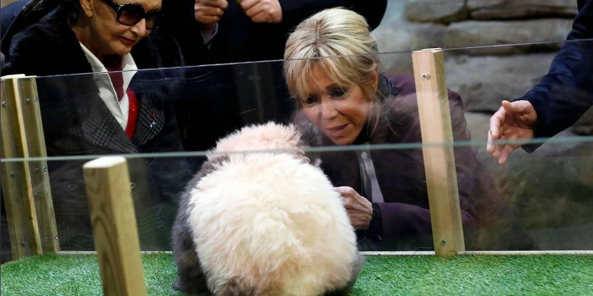 Brigitte Macron participa do batismo do 1º panda nascido na França