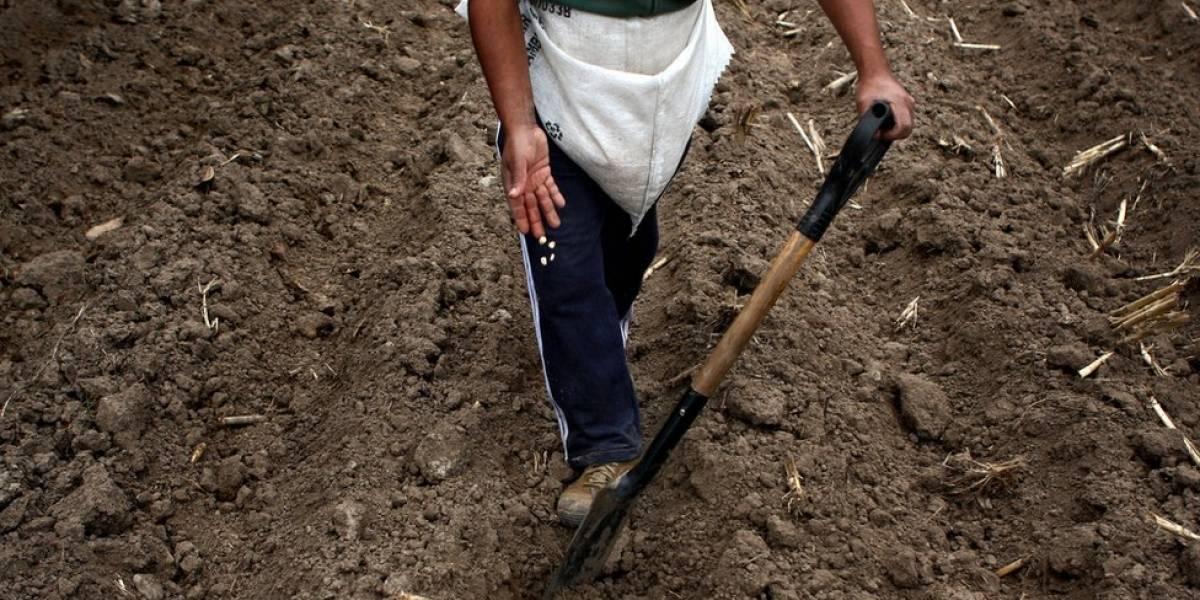 Anuncian medidas para ayudar a agricultores afectados por heladas en el país