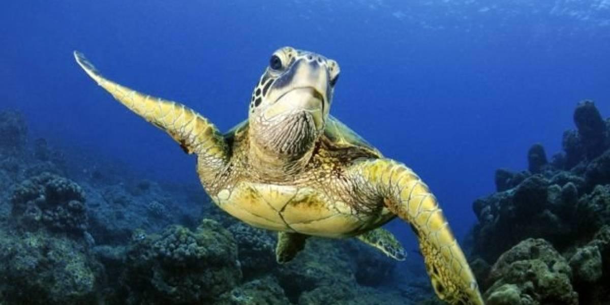 Liberan unas 400 tortugas aturdidas por el frío en Texas