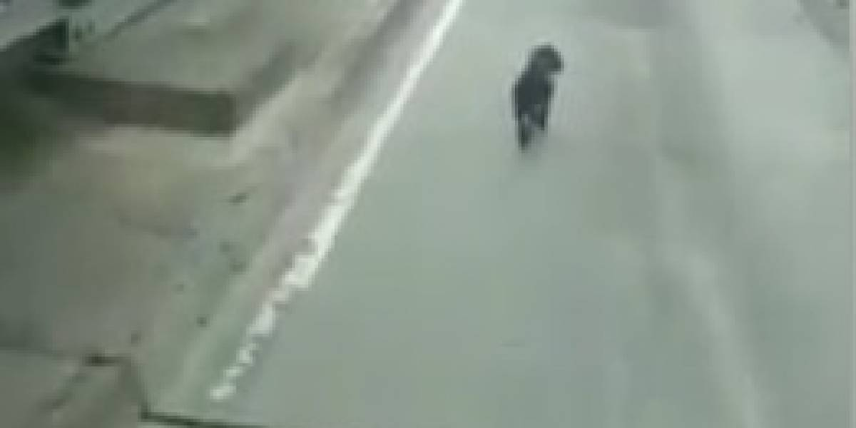 Video: conductor de TransMilenio salvaguarda la vida de un perrito