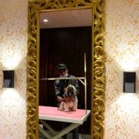 Critterati, hotel para perros