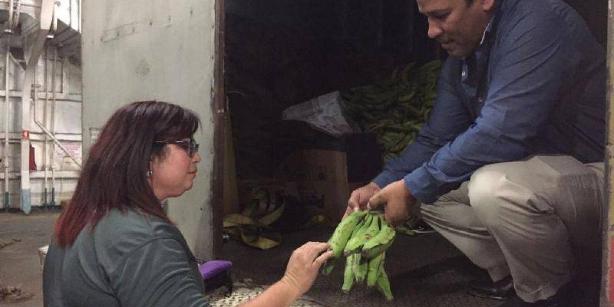 Agricultura intercepta cargamento ilegal de plátanos