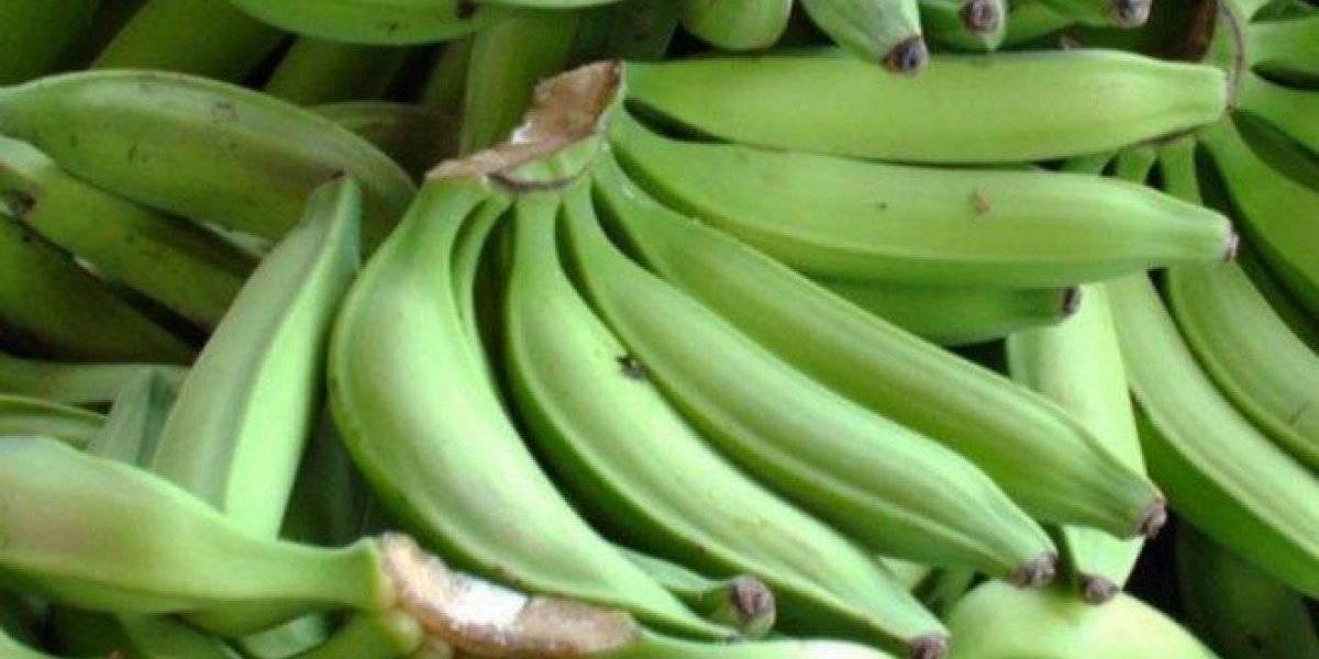 Roban 15 racimos de plátanos en Maunabo