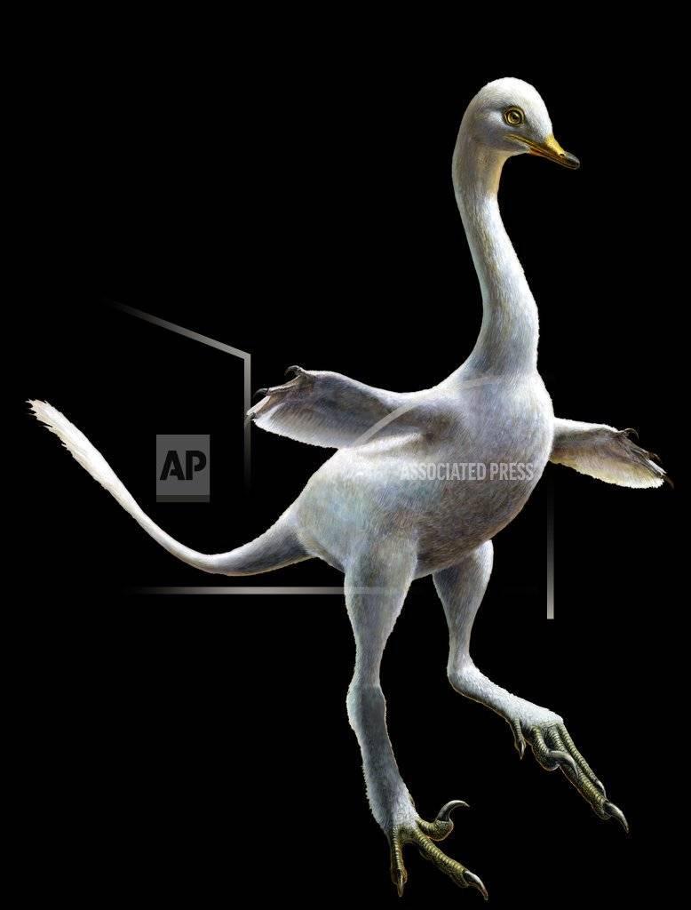 Este dibujo proporcionado por Lukas Panzarin, con Andrea Cau para supervisión científica, muestra al dinosaurio Halszkaraptor escuilliei.