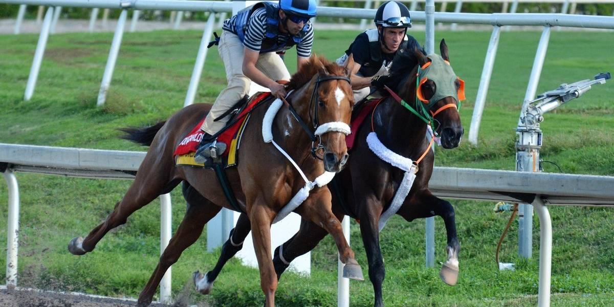 Apuestas en carreras de caballo han generado $5.1 millones desde su reinicio