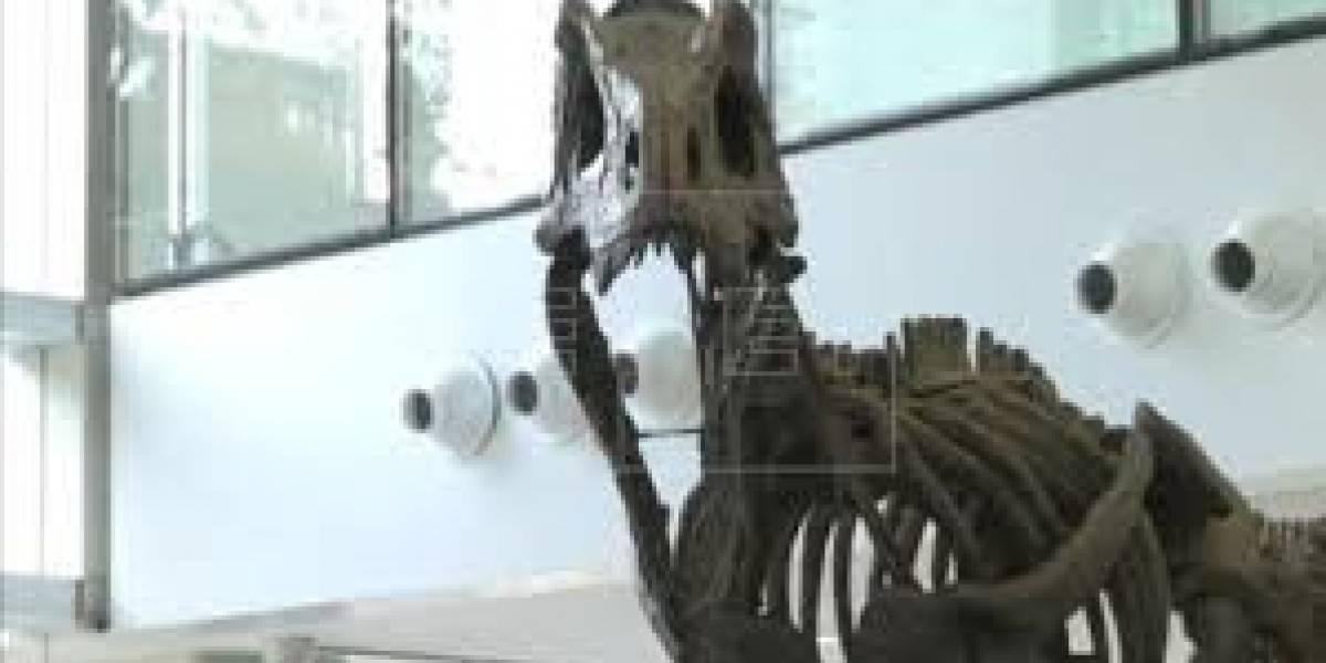 Descubren nuevo dinosaurio: mezcla de pato, cocodrilo, avestruz y cisne