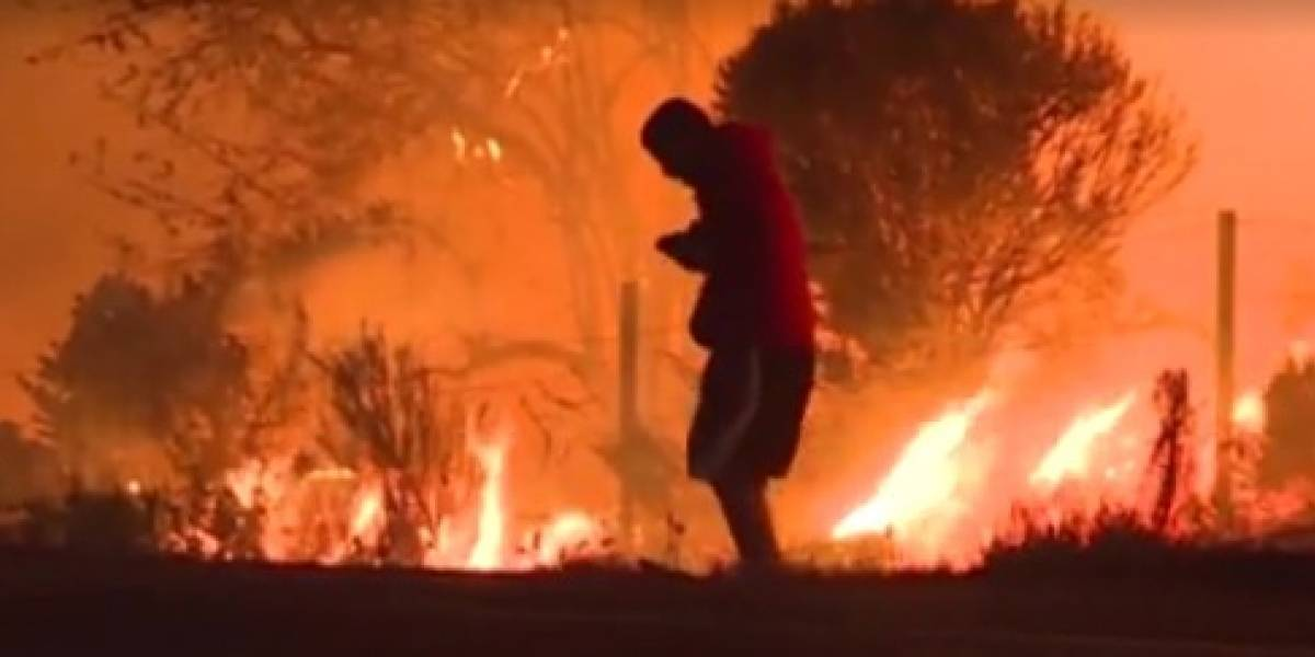 Desesperado, homem se arrisca para salvar coelho de incêndio na Califórnia; veja o vídeo