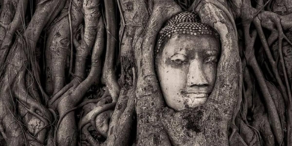 """A escultura de 700 anos que está sendo """"engolida"""" por árvores"""