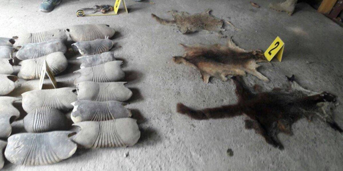 Las pieles y animales que guardaba un septuagenario en su casa